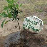Projeto UFAL Mais Verde comemora o plantio da milésima árvore no Campus do Sertão